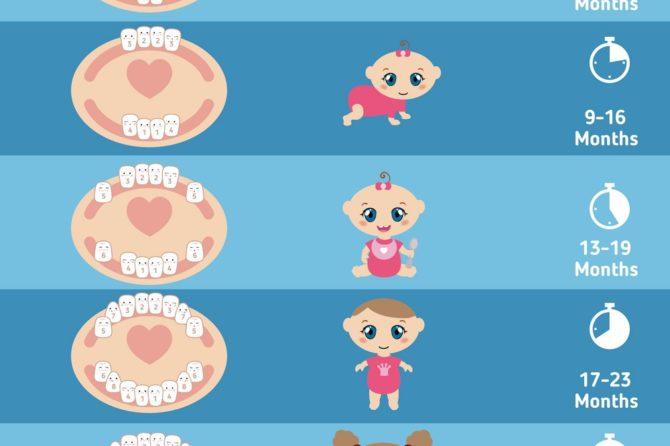 Baby's Teething chart